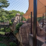 008 STL Zoo_ May 2017_small